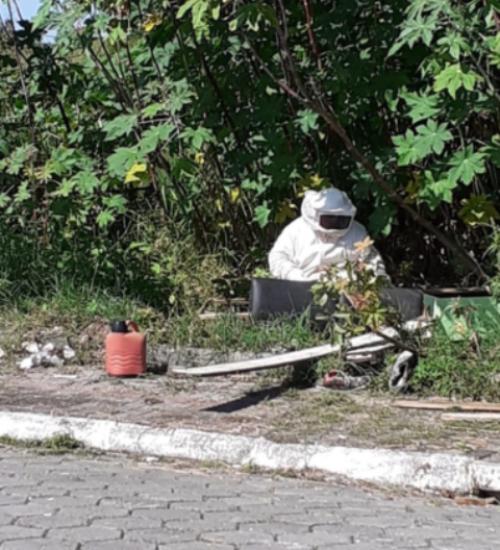Dois homens morrem após ataque de abelhas em SC