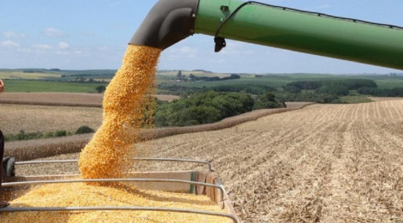 Estiagem afeta produção de milho e soja em Santa Catarina.
