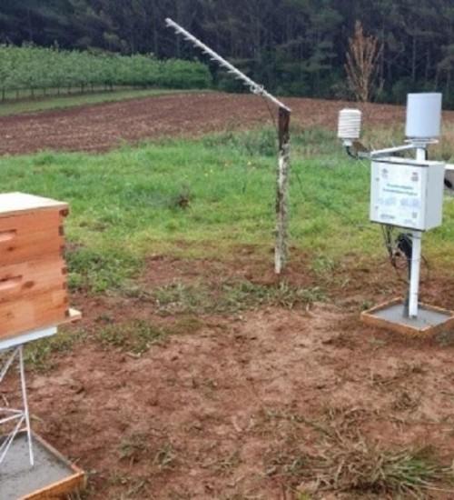 Monitoramento de colmeias em SC avalia impacto das mudanças climáticas na apicultura.