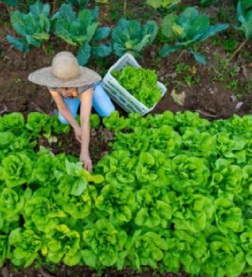 Santa Catarina cria projeto de apoio a pequenos empreendimentos rurais.