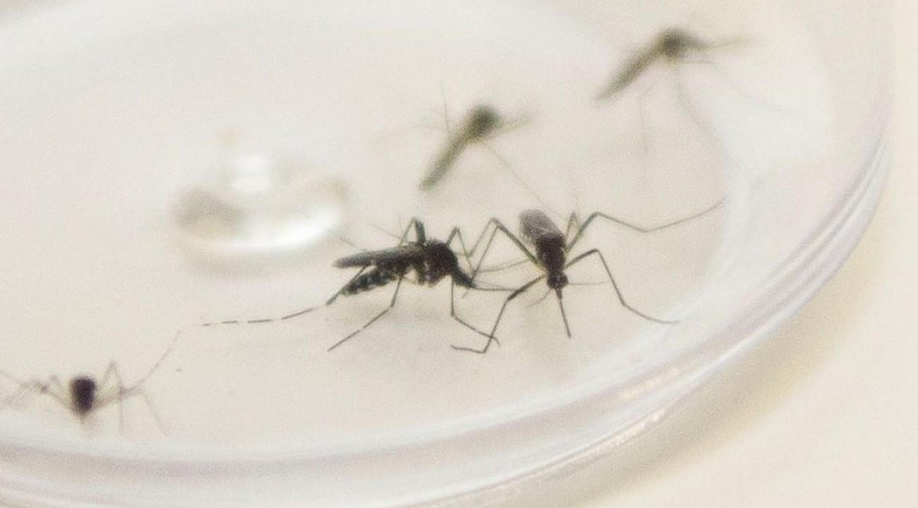 Duas cidades do Oeste estão com epidemia de dengue.