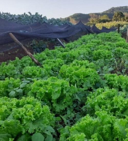 Entrega de produtos agrícolas em domicílio é alternativa segura para produtores e consumidores.