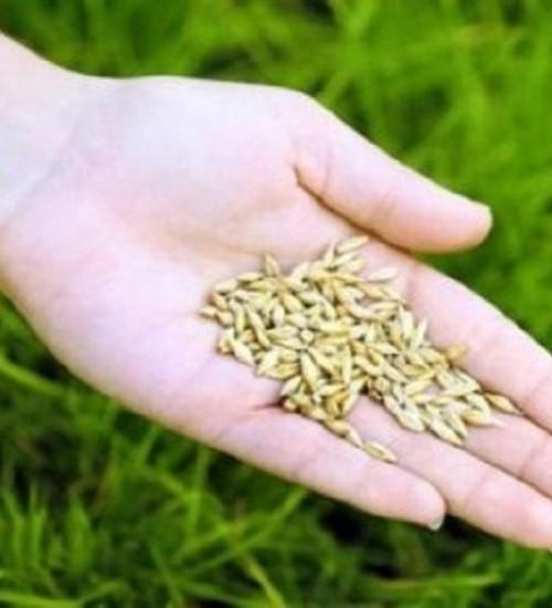 Agricultura entrega autorizações do programa de Sementes de Pastagens.