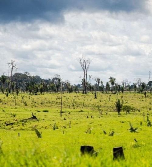 Bolsonaro autoriza uso das Forças Armadas no combate ao desmatamento.
