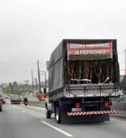 Cidasc alerta que comércio ambulante de mudas em Santa Catarina é proibido e deve ser denunciado.