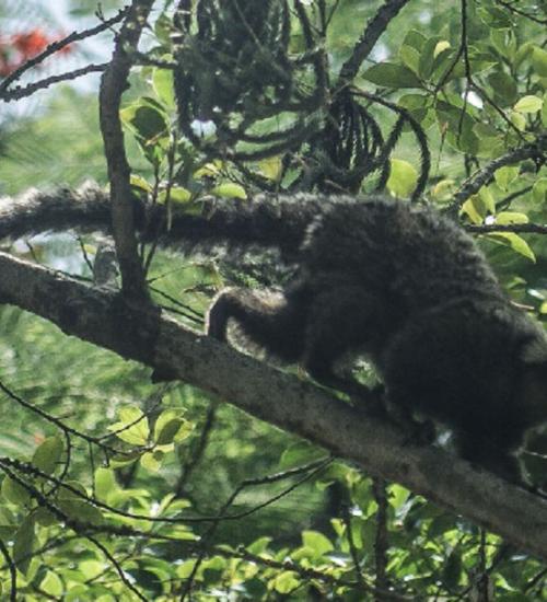 Febre amarela em macacos acende alerta sobre importância da vacina.