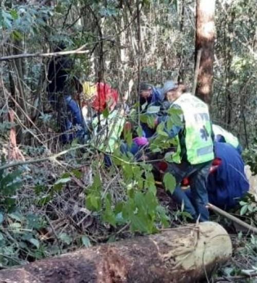 Homem gravemente ferido ao ser atingido por árvore em SMOeste.