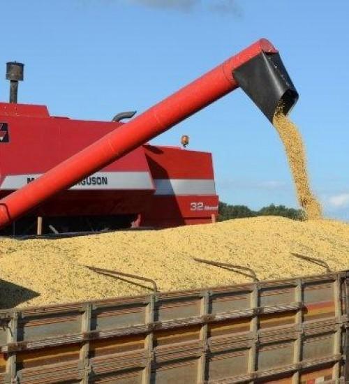 Santa Catarina bate recorde na exportação de soja nos quatro primeiros meses do ano.