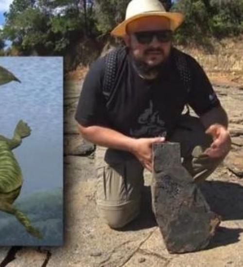 Seca leva à descoberta de fósseis de 280 milhões de anos em SC.