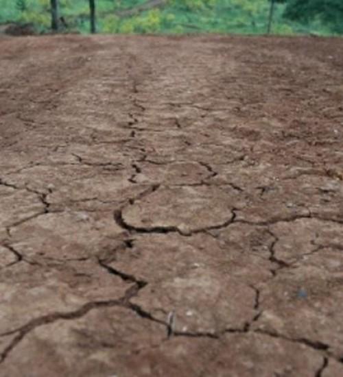 143 municípios de SC decretaram emergência devido à estiagem.