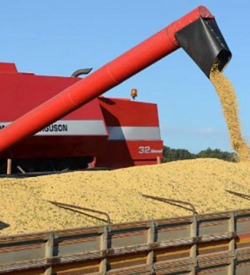 Santa Catarina exportou quantidade recorde de soja até maio, aponta Epagri/Cepa.