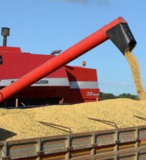 Agronegócio responde por 72% das exportações catarinenses no primeiro semestre de 2020.