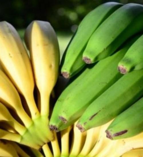 Frutas tropicais geram lucro em microclimas no Oeste Catarinense.
