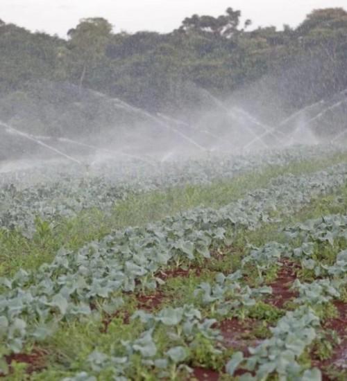 Governo reduz taxa de juros para agricultores prejudicados pelo 'Ciclone Bomba'.