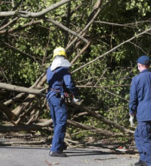 Madeira de árvores derrubadas pelo ciclone podem ser usadas no reparo dos danos.