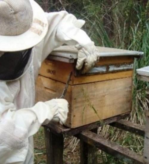 Safra catarinense de mel 2019/20 chega a 7,5 mil toneladas e supera anos anteriores.