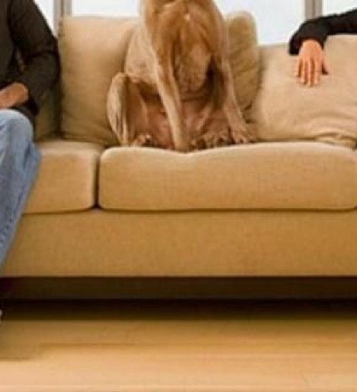 Cachorro é alvo de disputa entre mulher, ex-marido e sogra na justiça em SC.