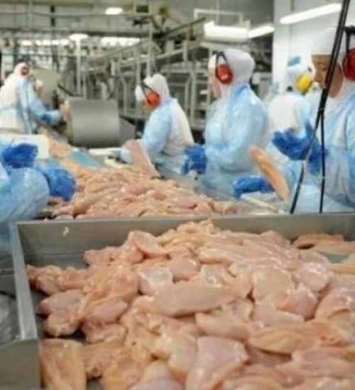 Hong Kong suspende importação de frigorífico de SC após caso de Coronavírus em frango.