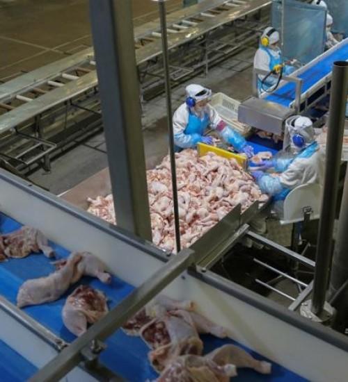 Mapa recebe comunicado de Hong Kong sobre suspensão de importação de frigorífico em SC.