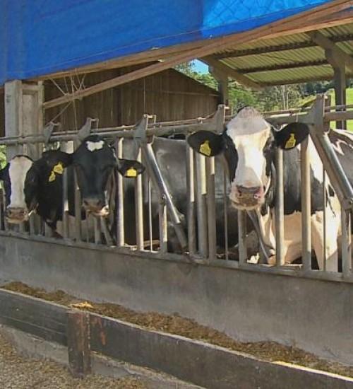 Forte calor traz prejuízos para produtores rurais no Oeste de SC.