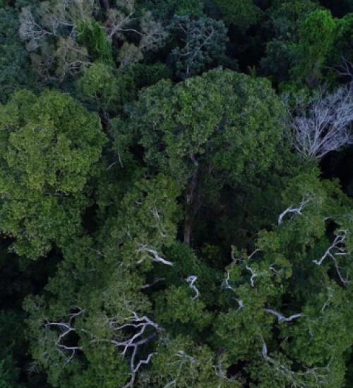 Desmatamento na Amazônia tem queda de 70% em janeiro