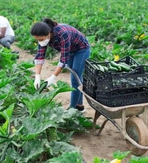 Está em vigor normas técnicas para produção integrada de folhosas.