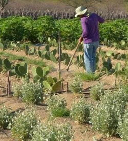 Governo lança programa para agilizar legalização da ocupação de áreas rurais da União.