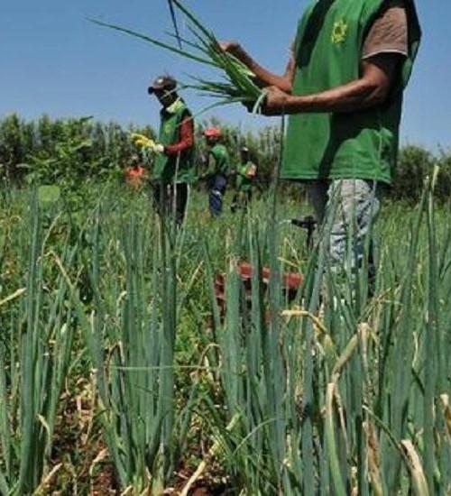 Ministério da Agricultura libera R$ 74 milhões em recursos do Garantia-Safra.