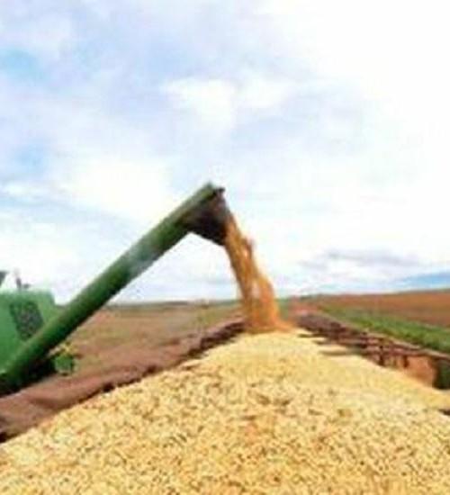 Produção de grãos da safra 2020/21 pode chegar a 268,3 milhões de toneladas.