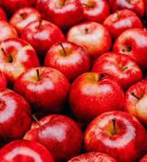 Santa Catarina começa colheita da maçã.