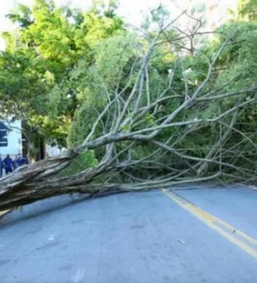 Eventos climáticos elevam o pagamento de seguros em SC.