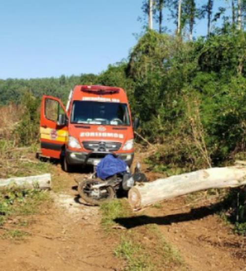 Idoso morre após ser atingido por árvore no Oeste