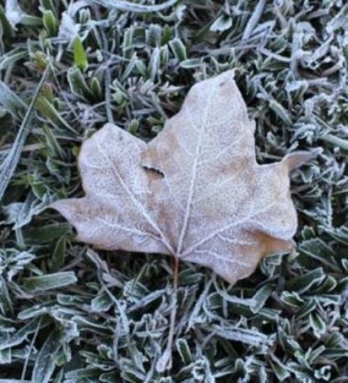 SC pode ter geada e temperaturas de até -2°C na próxima semana.
