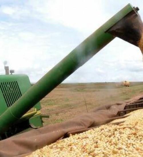 Imposto de importação do milho e soja é suspenso até fim do ano.