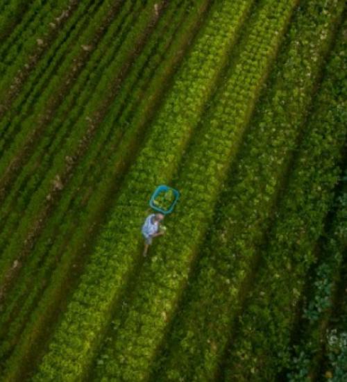 Santa Catarina alcança o maior valor de produção agropecuária da história.