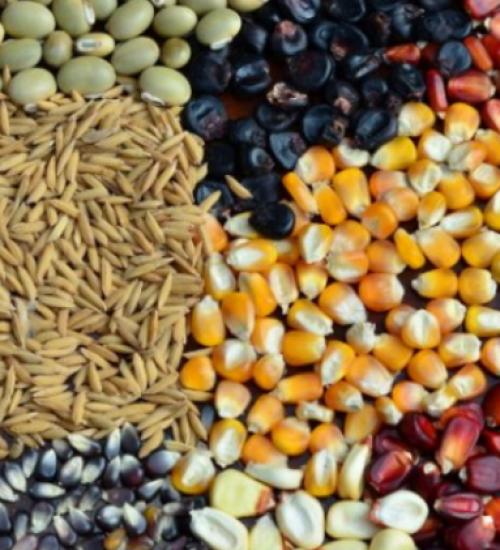 Capacitação técnica on-line na produção de grãos começa dia 12 de maio.