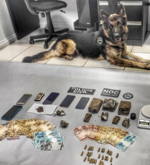 Grande operação para repreender organização criminosa é realizada no Oeste de SC.