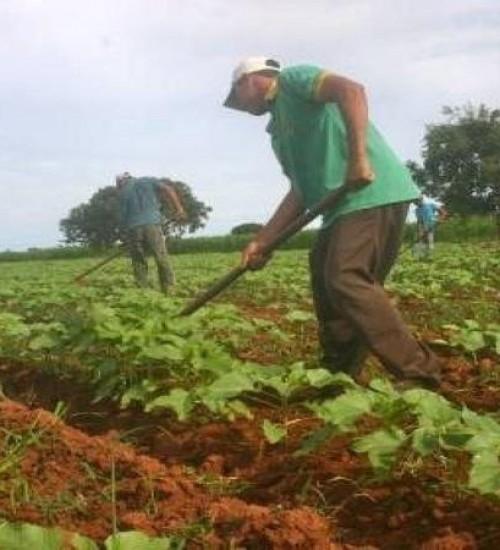 Programa facilitará acesso de agricultores familiares a crédito fundiário.