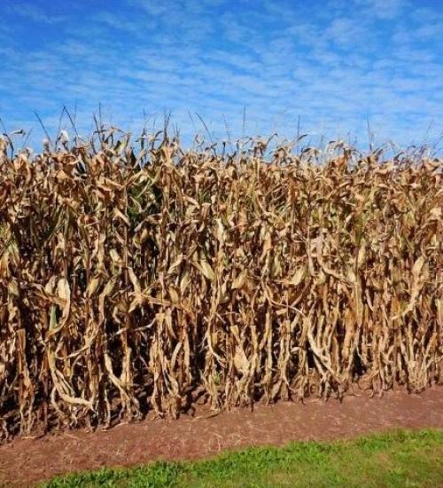 Sintraf pede distinção de taxas pagas por agroindústrias e ações de combate a estiagem.