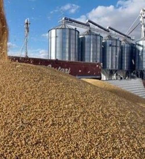 Capacidade de armazenamento agrícola teve retração, diz IBGE.