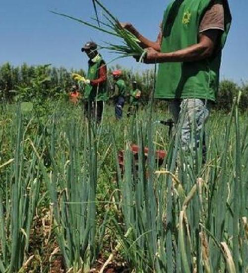 Garantia-Safra autoriza pagamento para mais de 380 mil agricultores.