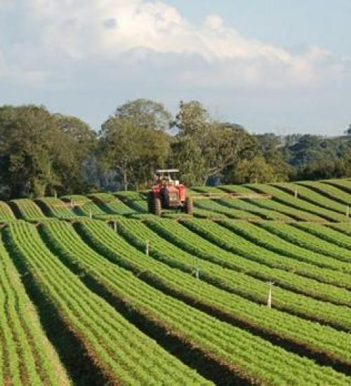 Justiça Federal suspende decisão que colocava em risco agricultura de SC.