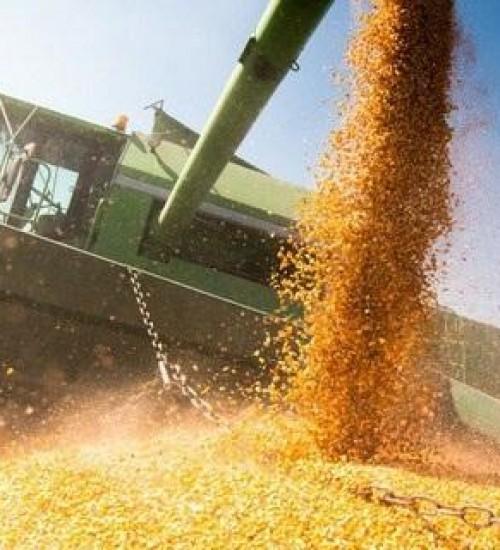 Ministério da Agricultura lança Observatório da Agropecuária Brasileira.