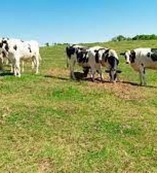 Santa Catarina avança na certificação de propriedades livres de brucelose e tuberculose.