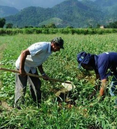 Pequenos produtores rurais terão acesso a mais de R$ 5 bi; recurso foi disponibilizado pelo BNDES.