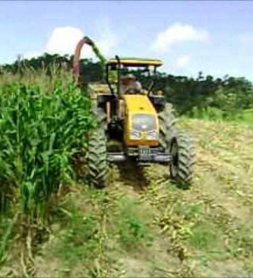 Extremo-Oeste representa quase 24% do total da safra de milho silagem em SC.