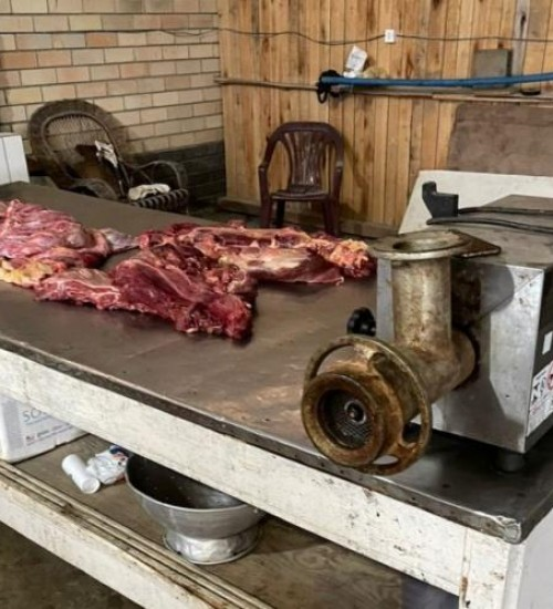 Mais de 500 quilos de carne de cavalo apreendidos no Sul de SC estavam em CTG.