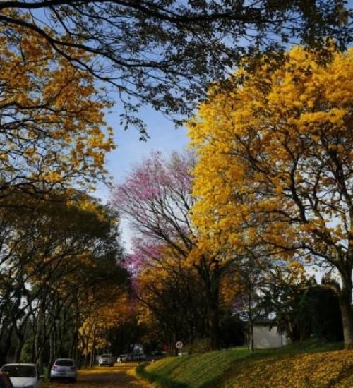 Primavera será mais seca e quente no Oeste de Santa Catarina.