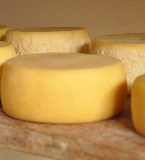 Produção de queijos artesanais tem regulamentação alterada em SC.