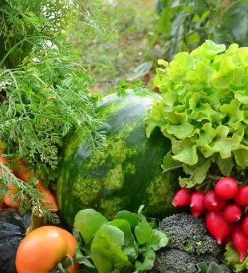 SC sanciona lei que incentiva a produção de alimentos orgânicos.